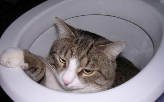 Понос у кошки – что делать?