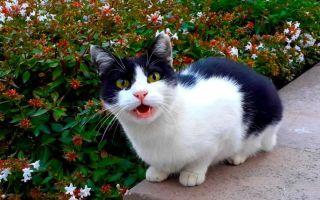 Почему кошка нападает, кусается и царапается?