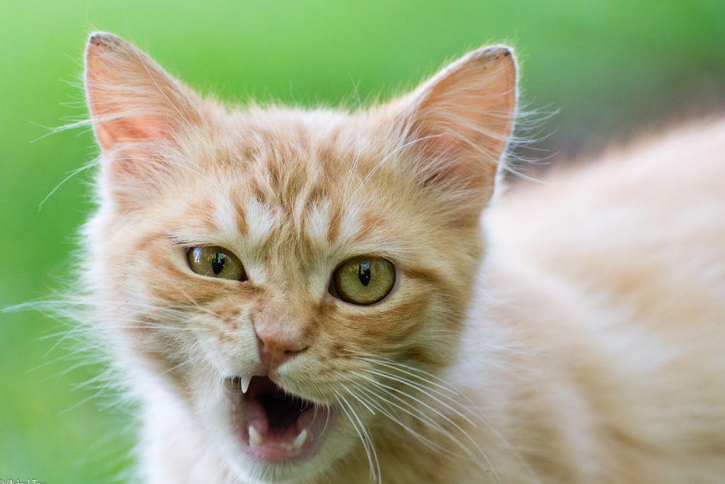 кошка бросается на хозяев
