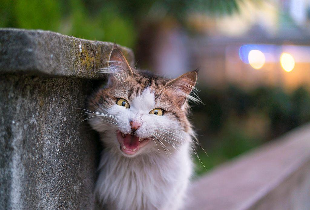 кошка кидается