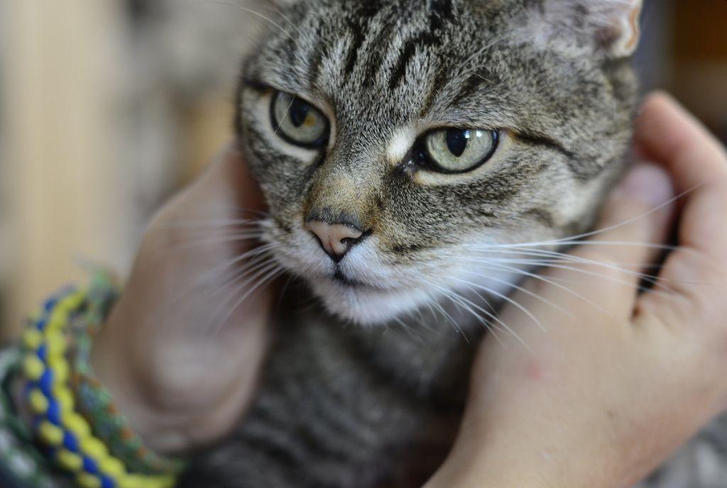 нападение кота