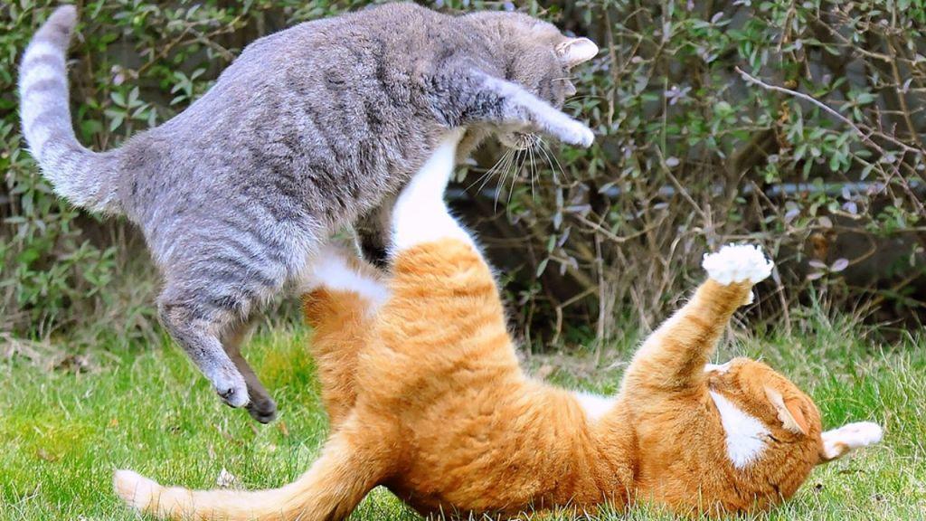 кошка бросается