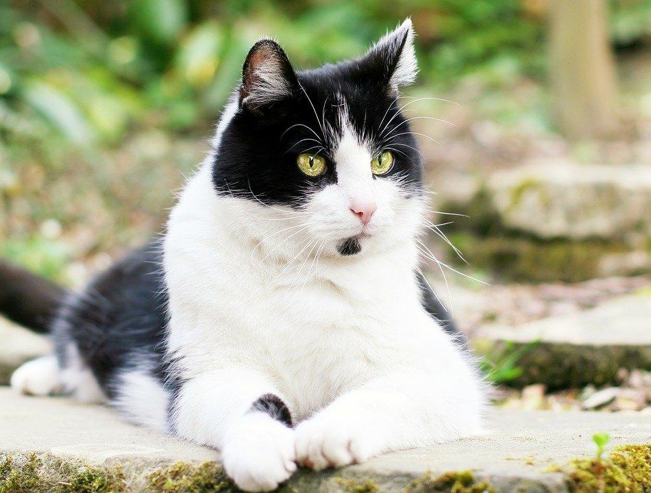 https://cdn.pixabay.com/photo/2016/02/11/16/58/cat-1194080_960_720.jpg