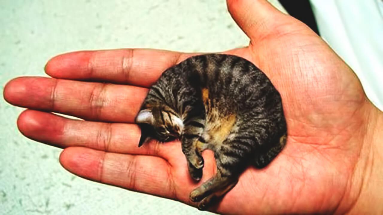 Самые маленькие кошки в мире: Топ-10, фото